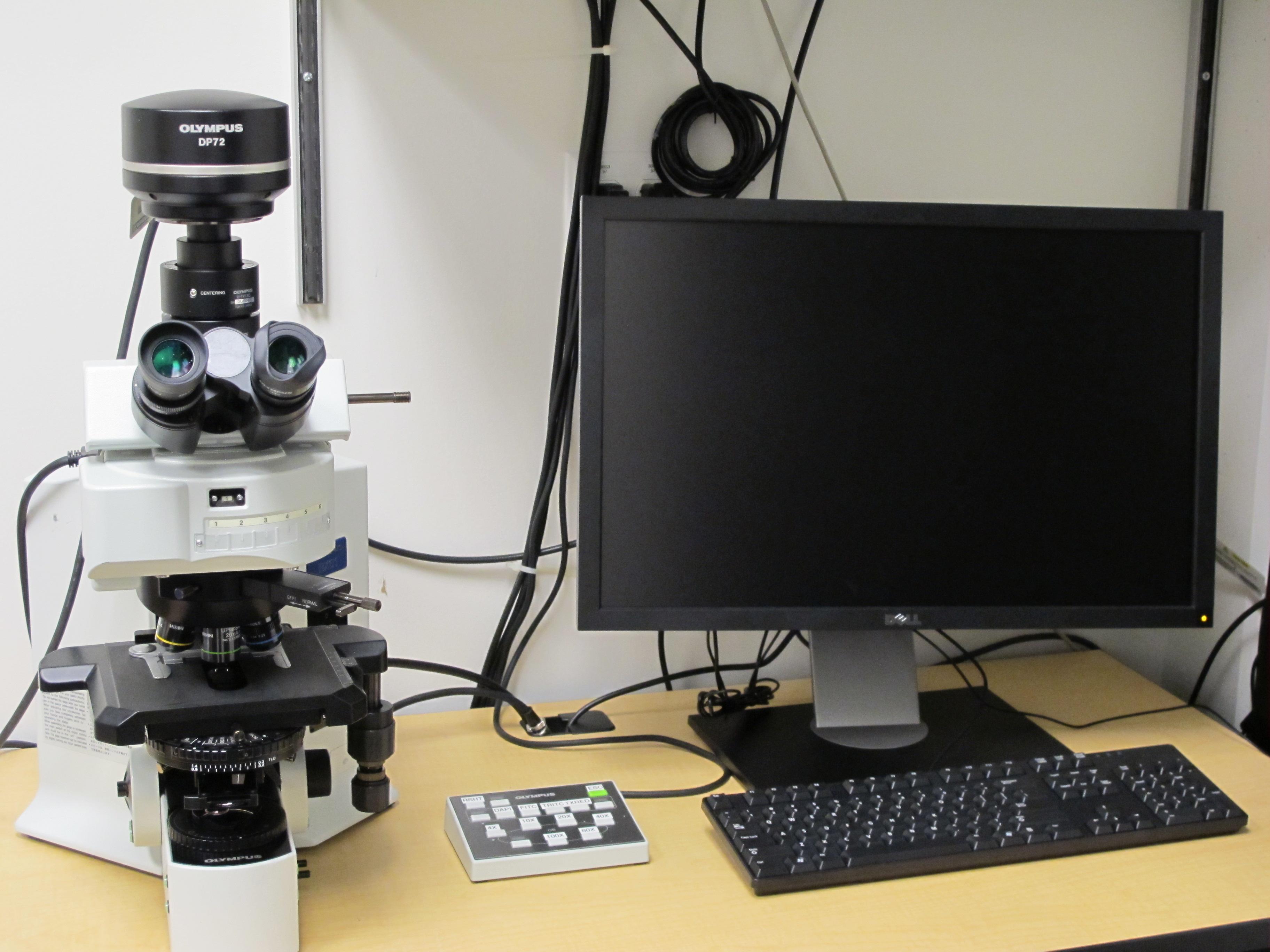 TP_olympus-microscope