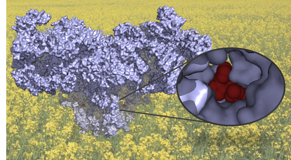 3D structure of the Ryanodine Receptor with insecticide chlorantraniliprole