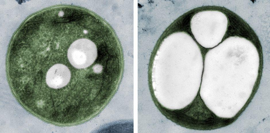 Bioplastic in a petri dish